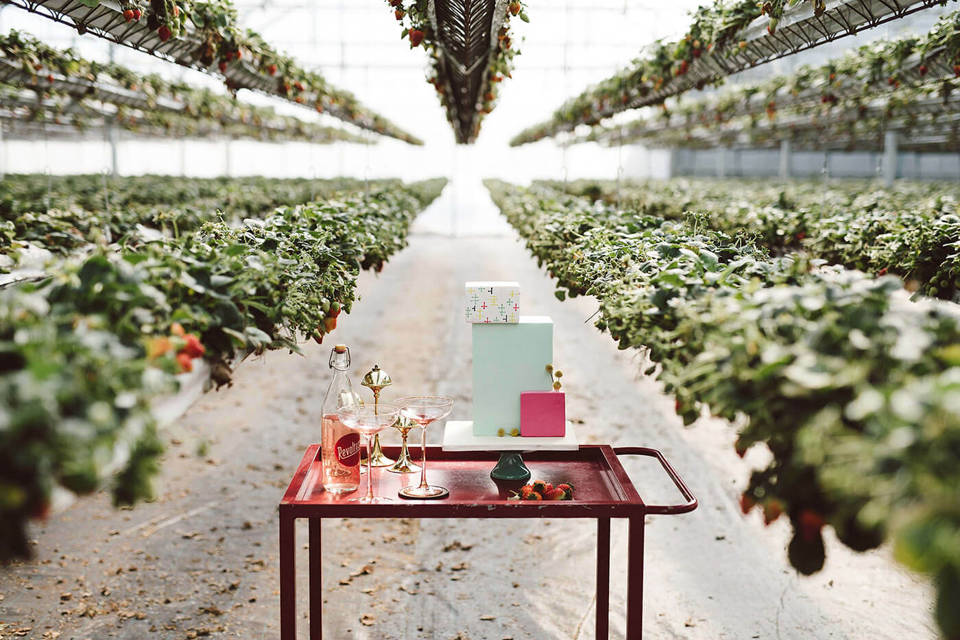 roma-organizacao-eventos-editorial-mid-century-modern-wedding-in-a-strawberry-field-26