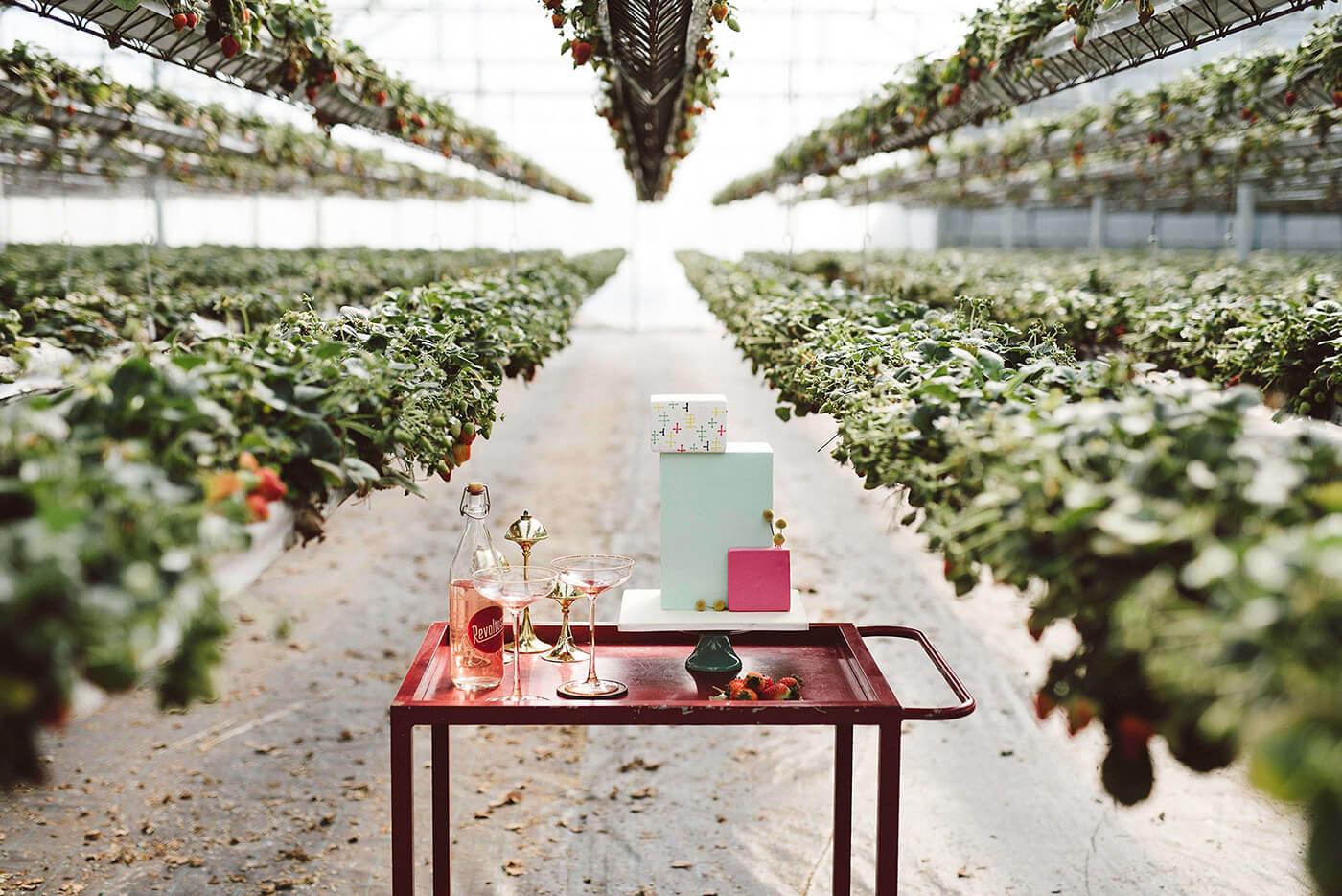 roma-organizacao-eventos-editorial-mid-century-modern-wedding-in-a-strawberry-field-26